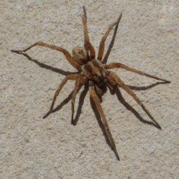 Уничтожение пауков в Сызрани